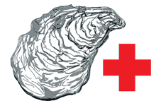 True Oyster Restoration Initiative - Save the Oyster